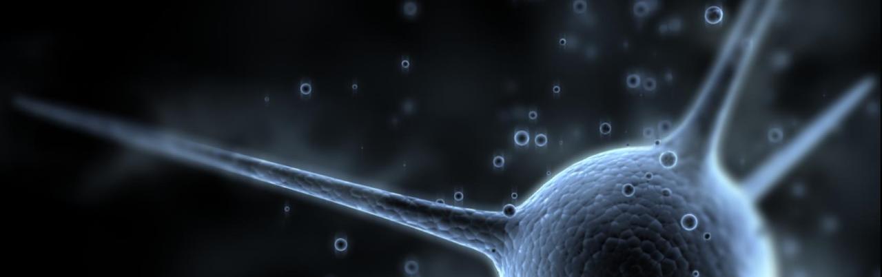 SEP53_neurone