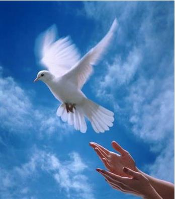 Colombe de la paix